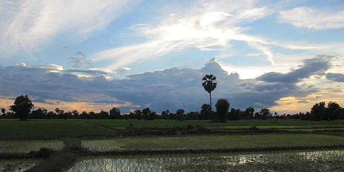 rijstvelden laos