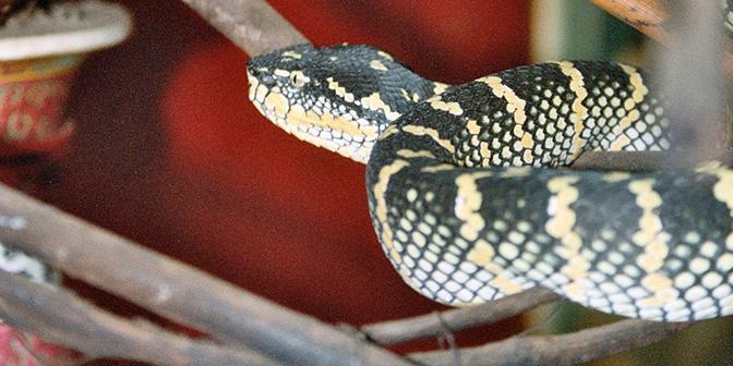 snake tempel penang