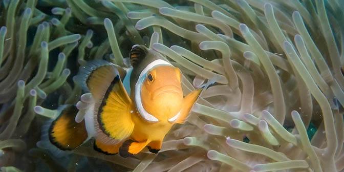 duiken maleisie