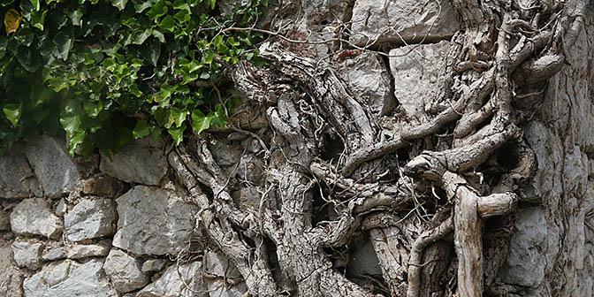 stari bar natuur montenegro