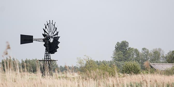 windmolens in het veen