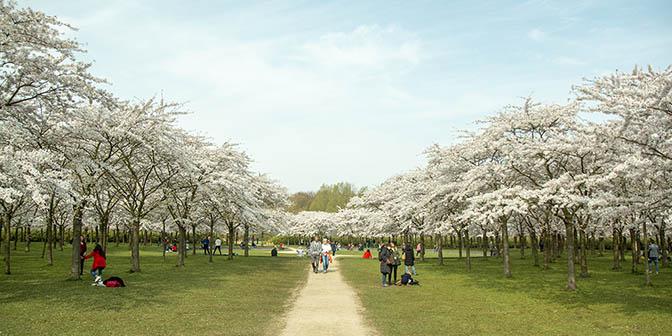 amsterdamse bos bloesem park