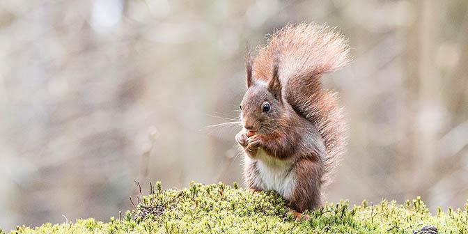 eekhoorn fotograferen