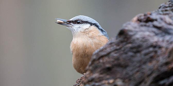 natuur vogel