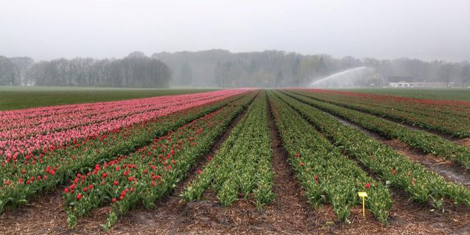 tulpen wandelen drenthe