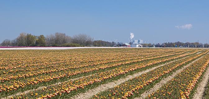 wandeltocht tulpenvelden uithuizermeeden