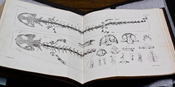 antieke boeken haarlem