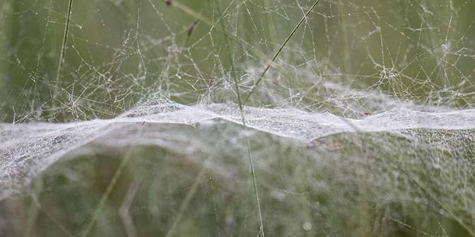 spinrag heide zomer