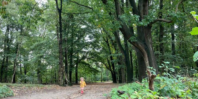 kaapse bossen herfst