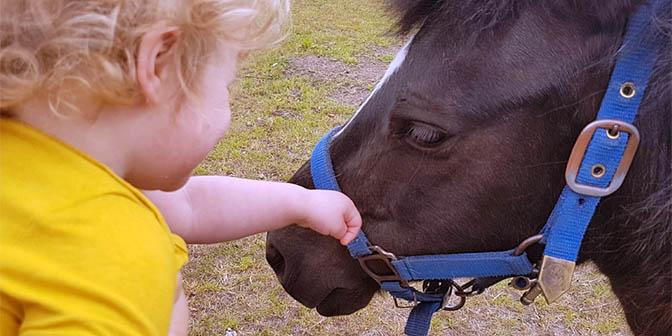paarden knuffelen