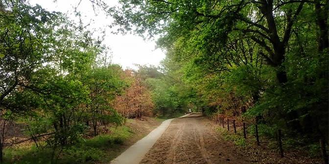 wandelen meinweg limburg bos