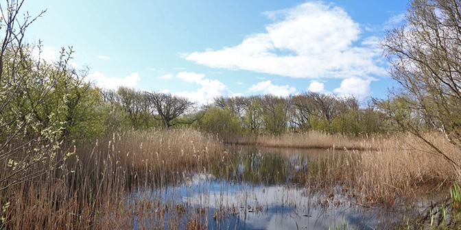 zwanenmeer noord-holland