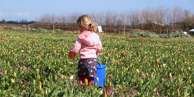 tulpen plukken pluktuin bakkum