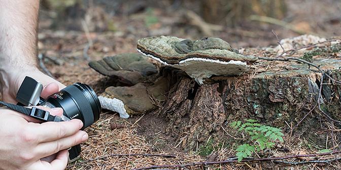 paddenstoel camerastandpunt