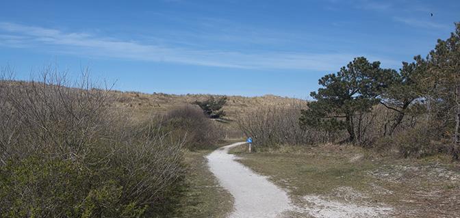 wandelen noord-holland pettemerduinen