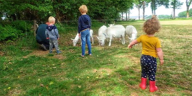 geiten voeren op de boerderij