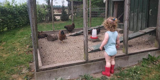 kippen boerderij