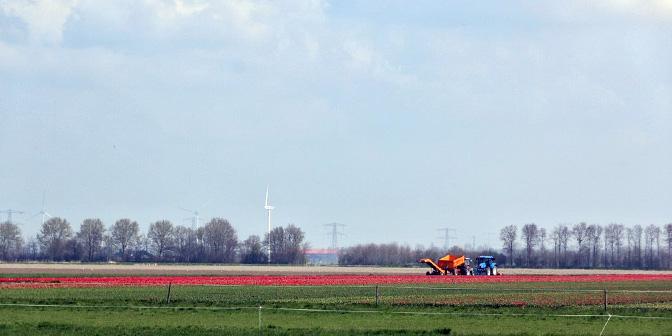 tulpenvelden flevoland bezoeken