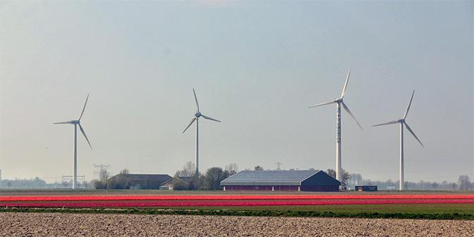 wandelroute flevoland tulpen windmolens