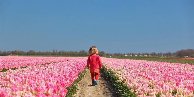 wandelen tulpenvelden flevoland swifterbant