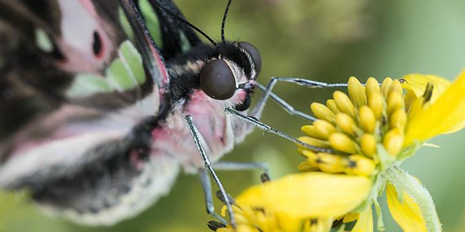 vlinders botanische tuinen utrecht