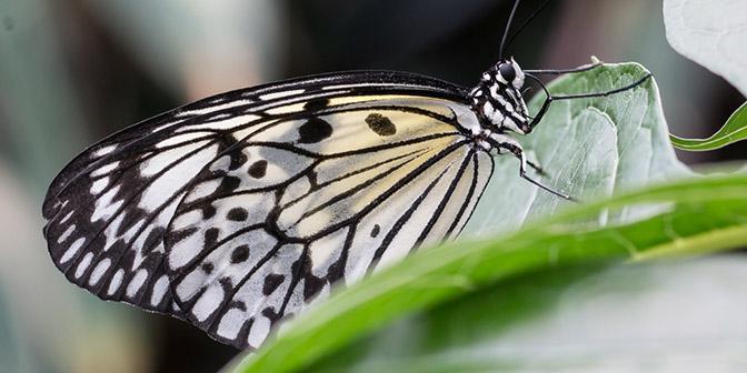 macrolens vlinder