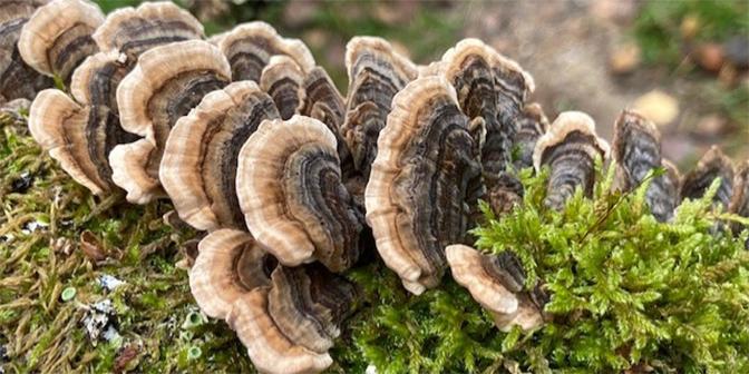 paddenstoelen heuvelrug