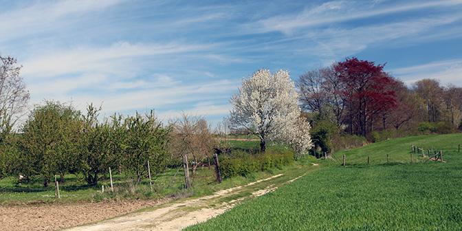 bloesem heuvels limburg