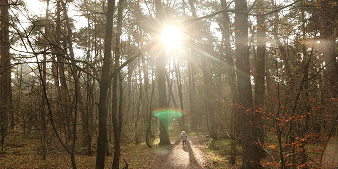 heidestein bos natuur in nederland