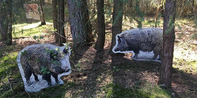 schapenroute heidestein