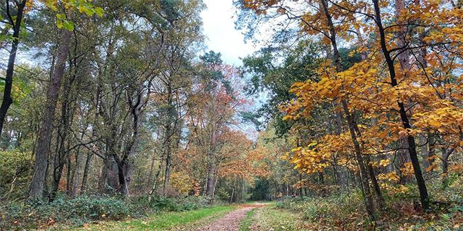 herfst utrechtse heuvelrug