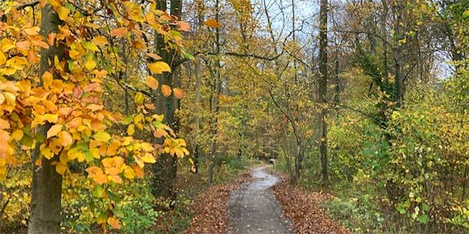amelisweerd herfst