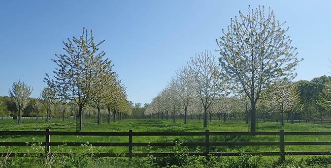 boomgaard landgoed oostbroek