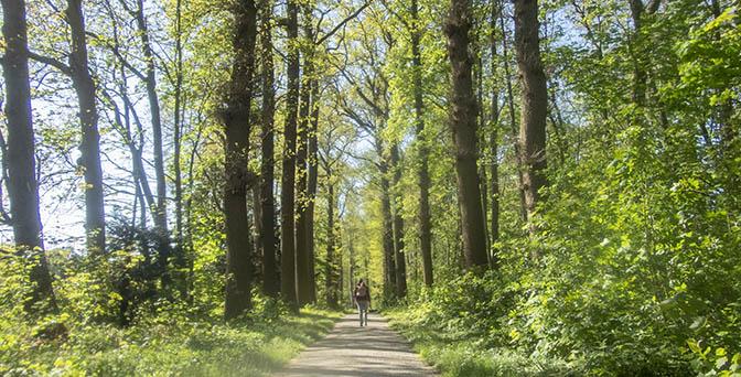 wandelen bos utrecht