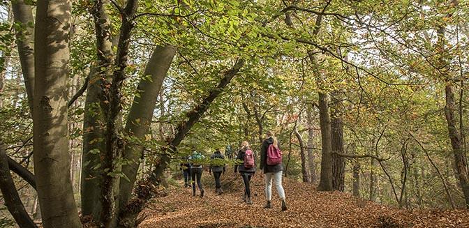 wandelmeditatie natuur nederland