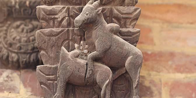 tempel dieren bhaktapur