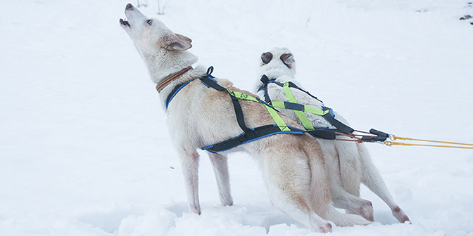 husky tocht noorwegen