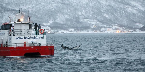 walvissen tromso noorwegen