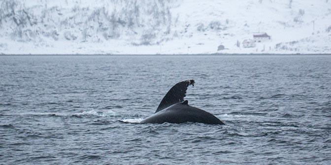 walvissafari noorwegen