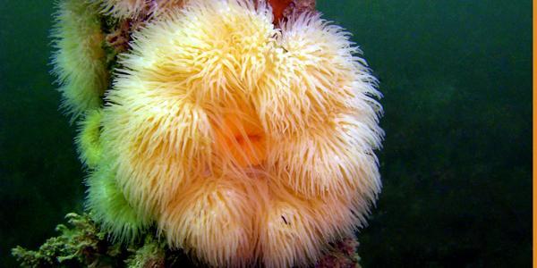 duiken plymouth