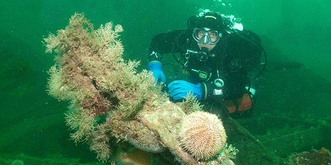 duiken scapa flow