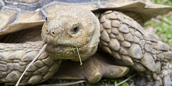turtle museum singapore