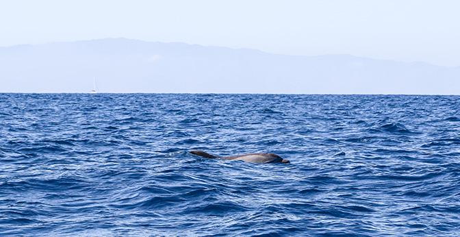 dolfijnen tenerie