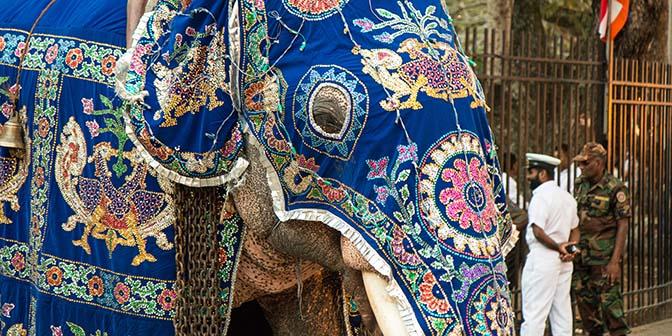 olifanten festical kandy