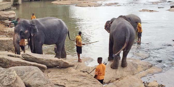 olifanten weeshuis sri lanka