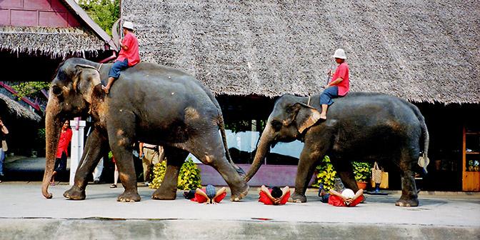olifant rijden kanchanaburi