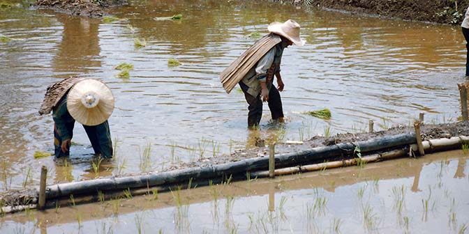 rijstvelden thailand