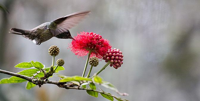 fotografie van vogels tropen