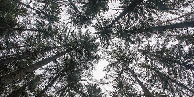 wandelen bos tsjechie