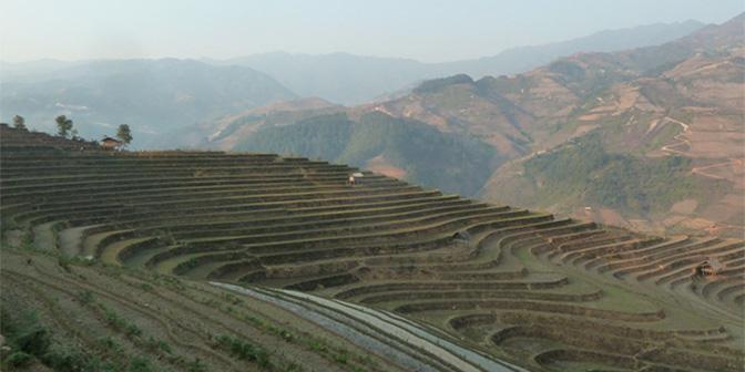 rijstvelden vietnam